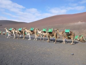 m_Camel train up Monte Del Fuego